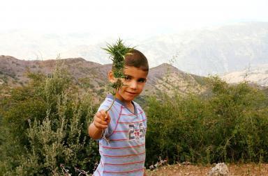 Coltivazione cannabis in Marocco