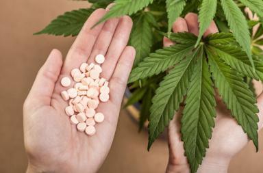 Cannabis oppioidi