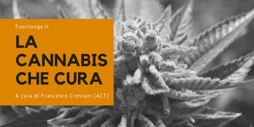 La rubrica sulla Cannabis Terapeutica di Fuoriluogo.it