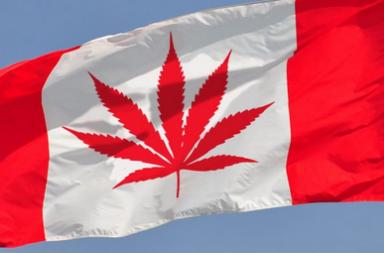 Foglia cannabis canadese