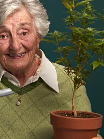 meglio legale cannabis io coltivo