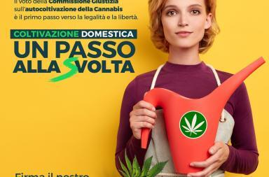 coltivazione cannabis meglio legale