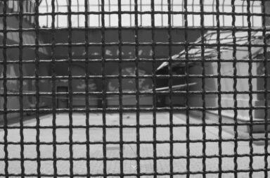 carcere antigone
